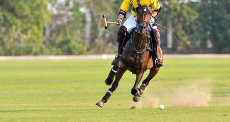 Polo Horse Player Riding To Control The Ball.