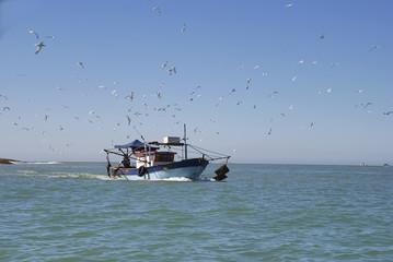 Barco de pesca e Trinta-réis-de-bando (Embarcação e Thalasseus acuflavidus) | Fishing boat and Cabot's-Tern  fotografado em Guarapari, Espírito Santo -  Sudeste do Brasil. Bioma Mata Atlântica.