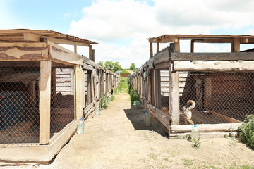Shelter cages with homeless dogs