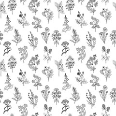 Seamless pattern of various hand drawn herbs and flowers. Background in black and white colors. Graphic style
