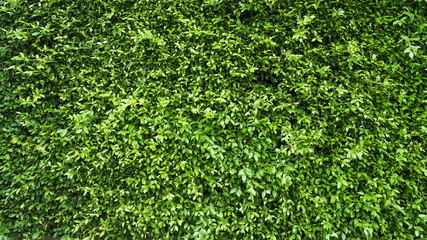 green leaf plant wall