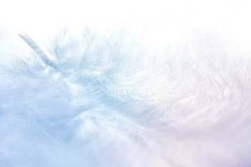 Airy soft fluffy feather close-up of macro of blue and pink pastel shades on white background with soft focus. Abstract gentle natural background with feather. Fototapete