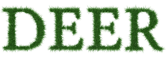 Deer - 3D rendering fresh Grass letters isolated on whhite background.