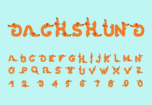 Dachshund font. Dog alphabet. Lettering home animal. ABC pet