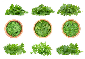fresh coriander leaves isolated on white background.