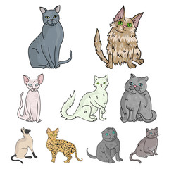 Collection of cats in one picture. Different cats in one picture. Cat breeds icon in set collection on cartoon style vector symbol stock illustration.