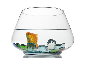 Goldfish in Fishbowl Isolated