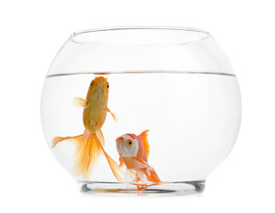 Goldfishes in Fishbowl Isolated