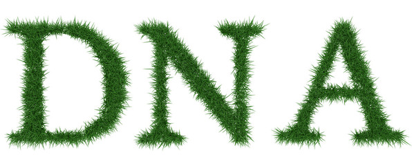 Dna - 3D rendering fresh Grass letters isolated on whhite background.