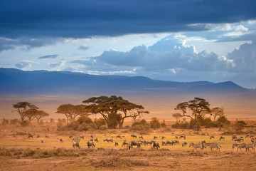 African Savannah. The foot of Mount Kilimanjaro. African animals.