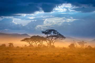 African Savannah. The foot of Mount Kilimanjaro. Wall mural