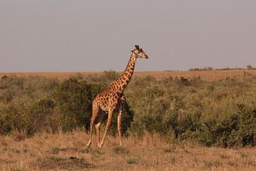 Tanzanian Wildlife