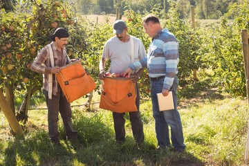 Farmer interacting with farmers in apple orchard