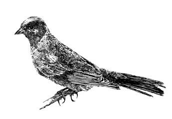 Small bird A