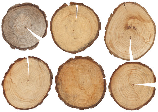 wood structure, isolated wood disk