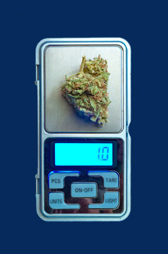 cannabis plant bud on weighing scales close up
