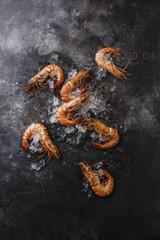 Boiled pink Tiger Prawn Shrimp on ice on black background copy space