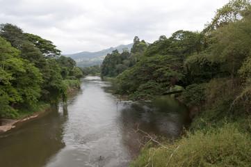 River in Royal Botanical Gardens, Peradeniya