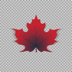 Maple leaf in a realistic style on transparent background, isolated object. Vector illustration