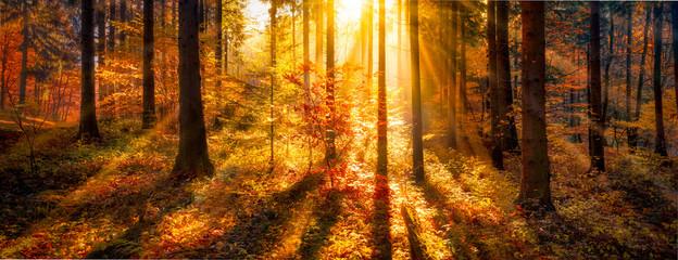 Wall Mural - Sonnendurchflutete Waldlichtung im Herbst als Panorama