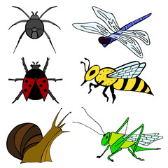 Set of insect. Spider, ladybird, snail, grasshopper, wasp, dragonfly painted on a white background.