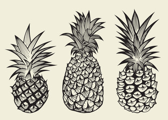 Hand drawn sketch style set illustrations of ripe pineapples. Exotic tropical fruit vector drawings isolated on white background.