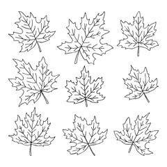 Beautiful set of doodle maple leaves. Isolated sketch. design background greeting cards and invitations to the wedding, birthday, mother s day and other seasonal autumn holidays.
