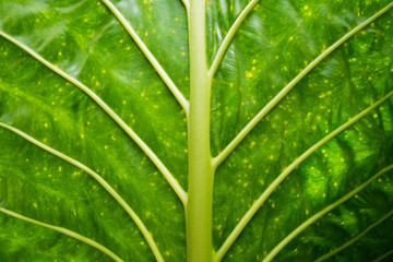 Fresh plants green leaf close up background, texture