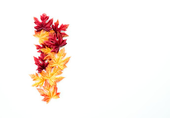 border row of red, orange and yellow autumn leaves isolated on white
