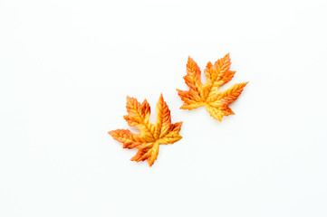 2 orange and yellow autumn leaves isolated on white