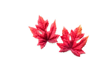 2 red and orange autumn leaves isolated on white