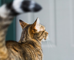 Side Profile of Cat Waiting at Door