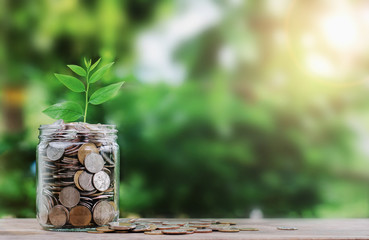 money with plant growing on coin in jar finance concept