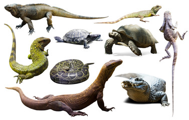 set of reptiles isolated Wall mural