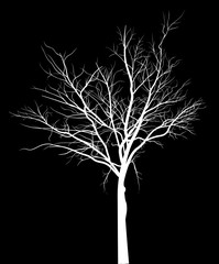 white bare medium tree silhouette on black