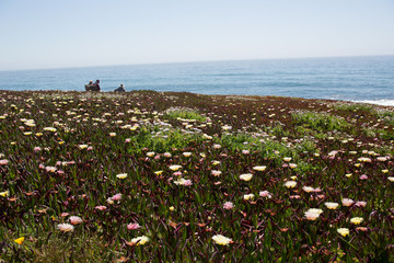 pacific coast spring bloom
