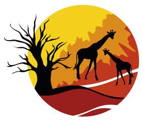 Africa con giraffe
