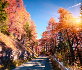Colorful morning view in larch forest. Sunny autumn scene in Dolomite Alps, Cortina d'Ampezzo location, Italy, Europe.