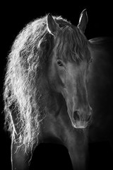 Beautiful andalusian horse in sunlight on black background