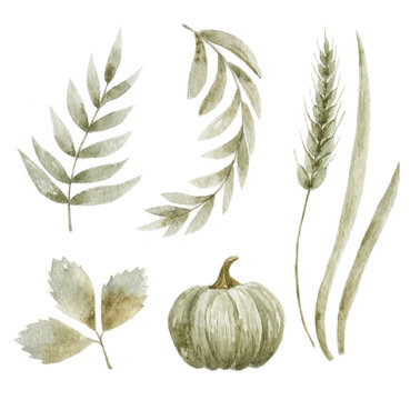 Watercolor floral illustration. Autumn theme. Hand-drawn illustration.