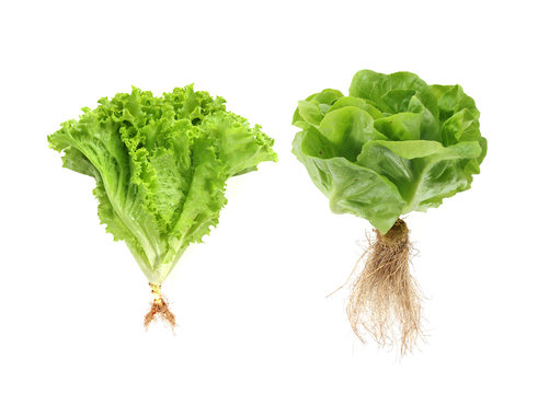 Set of fresh green vegetables isolated on white background