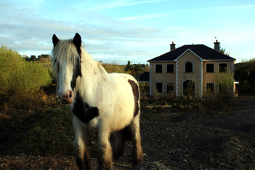 Horse and an empty House