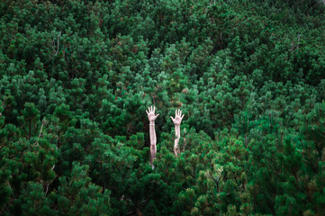 Female hands rise and stretch up above green pine trees. Abstract image of persons hands risen up visible among green rich fur trees that make up complete background