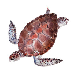The turtle, watercolor illustration isolated on white background.