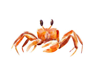 Watercolor illustration, hand drawn orange crab isolated object on white background.