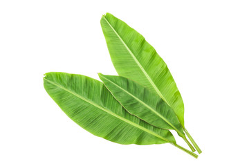 Banana leaves isolated over white. Photo includes CLIPPING PATH