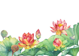 Banner, border of pink lotus flower with leaves, seed head, bud (water lily, Indian lotus, sacred lotus, Egyptian lotus). Watercolor hand drawn painting illustration isolated on white background.