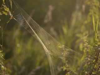 pajęczyna .sieć na owady