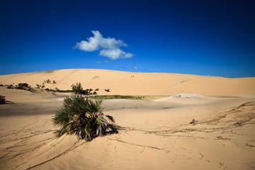 Bazaruto Dunes