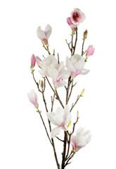 single white flower isolated on white
